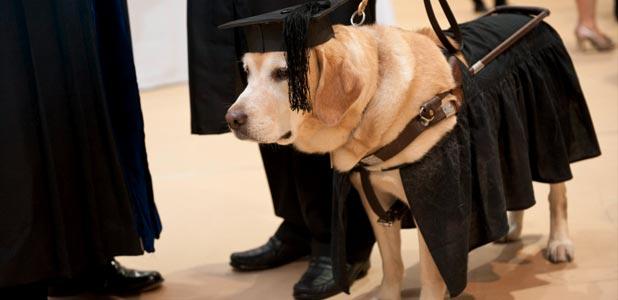 大学で犬の「キルシュちゃん」に名誉修士号を授与