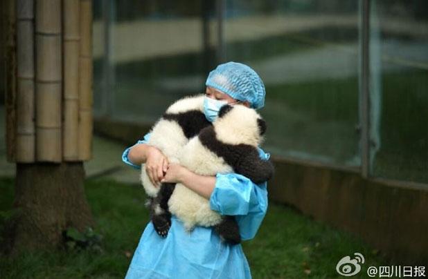 抱っこされるパンダ
