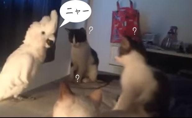 「ニャーニャー」と猫の鳴き真似