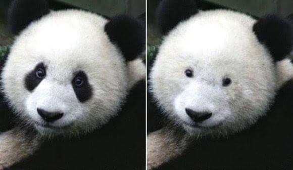 パンダによってアイメイクの大事さがよく理解できる