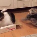 猫の喧嘩!高速猫パンチの応酬!