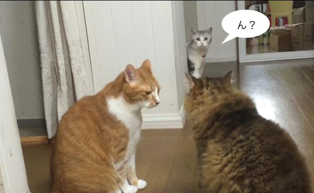 そこに違う猫さんすっとぼけて登場