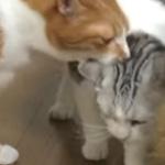 ケンカのとばっちりを受ける猫さん