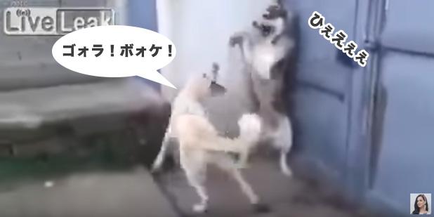 「お母さん激高」→「お父さんビックリ!」