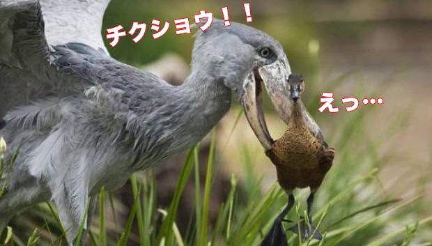 近くの鳥を噛む