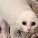 スクワットをしてたら警戒してきた猫さん