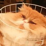 洗濯カゴにスッポリ入った猫さん